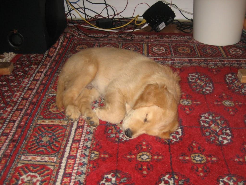 20050430-Dog-060
