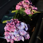 20120517flowers_2