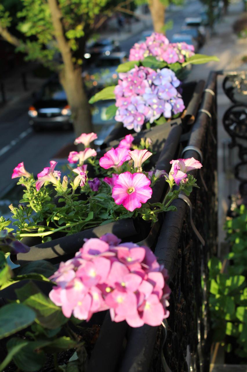 20120517flowers_3