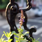 20120517flowers_4