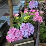 20120517flowers_5