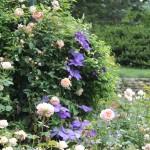 20120526-Arboretum-074