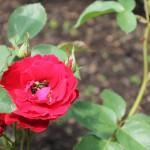 20120526-Arboretum-078