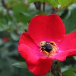20120526-Arboretum-083
