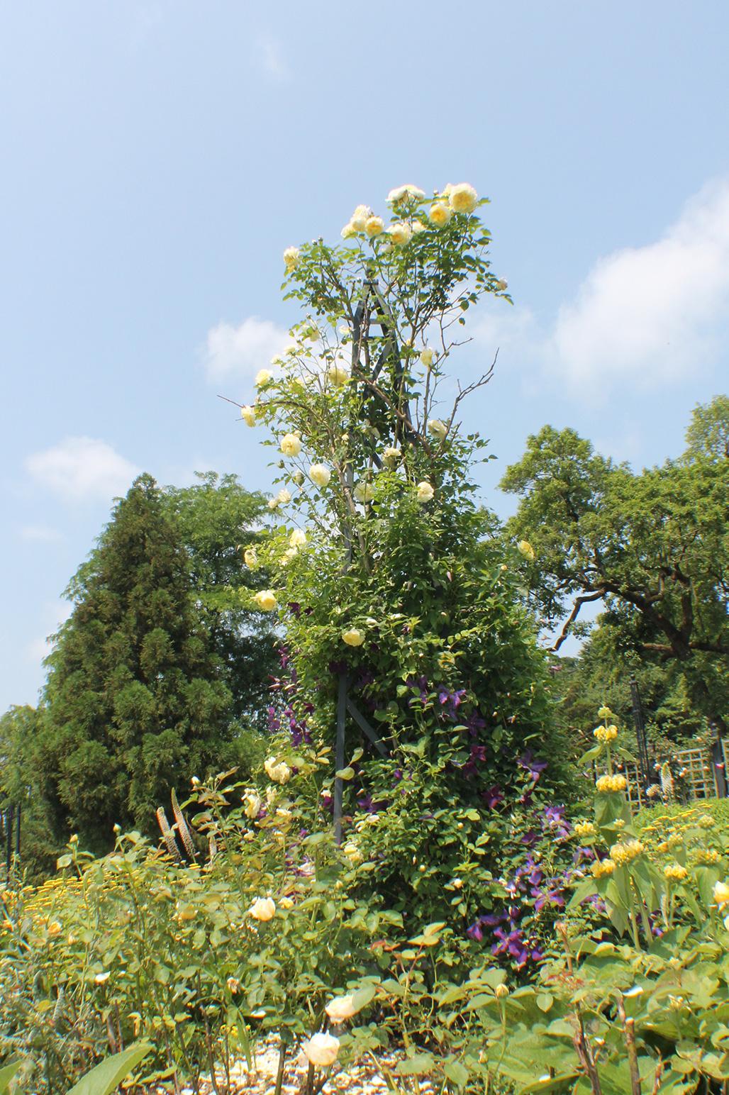20120526-Arboretum-087