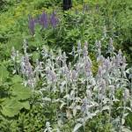 20120526-Arboretum-088