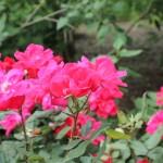 20120526-Arboretum-095