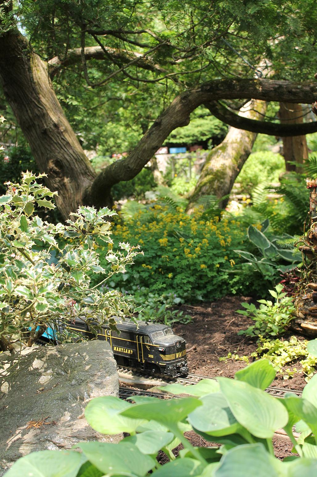 20120526-Arboretum-107