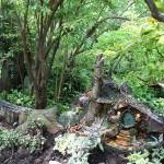 20120526-Arboretum-140