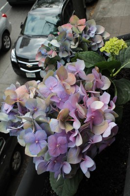 20120614_BalconyHydrangeas_01