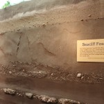 fossil layers in this habitat