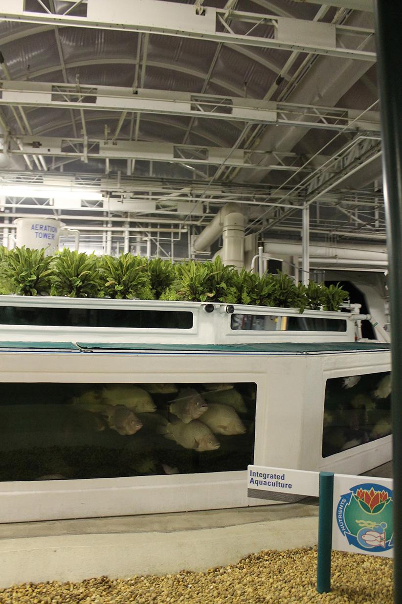 Symbiotic agri/aquaculture!