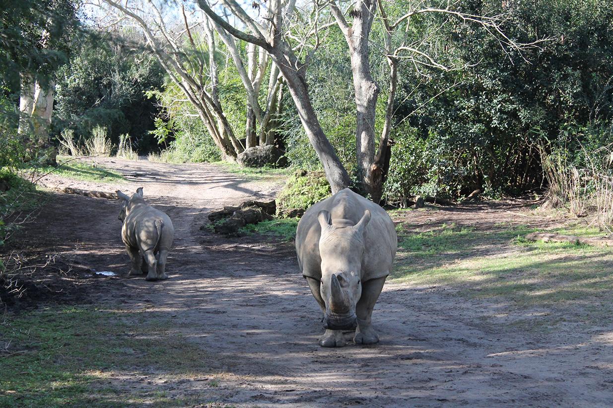 Baby rhino butt.